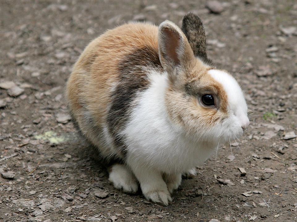 DAPZWD_dierenartsenpraktijk-meppel_content-konijn-hok