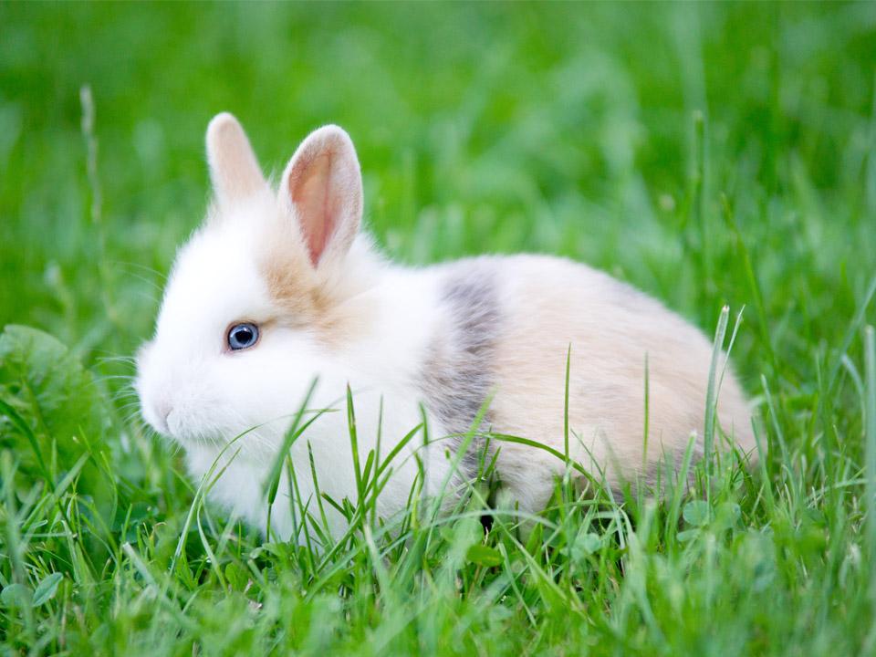 DAPZWD_dierenartsenpraktijk-meppel_content-konijnen