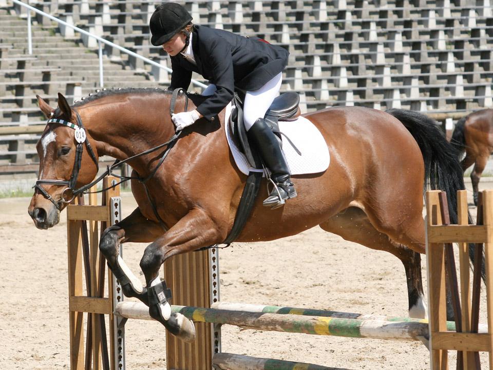 DAPZWD_dierenartsenpraktijk-meppel_content-paarden-FEI-paspoort