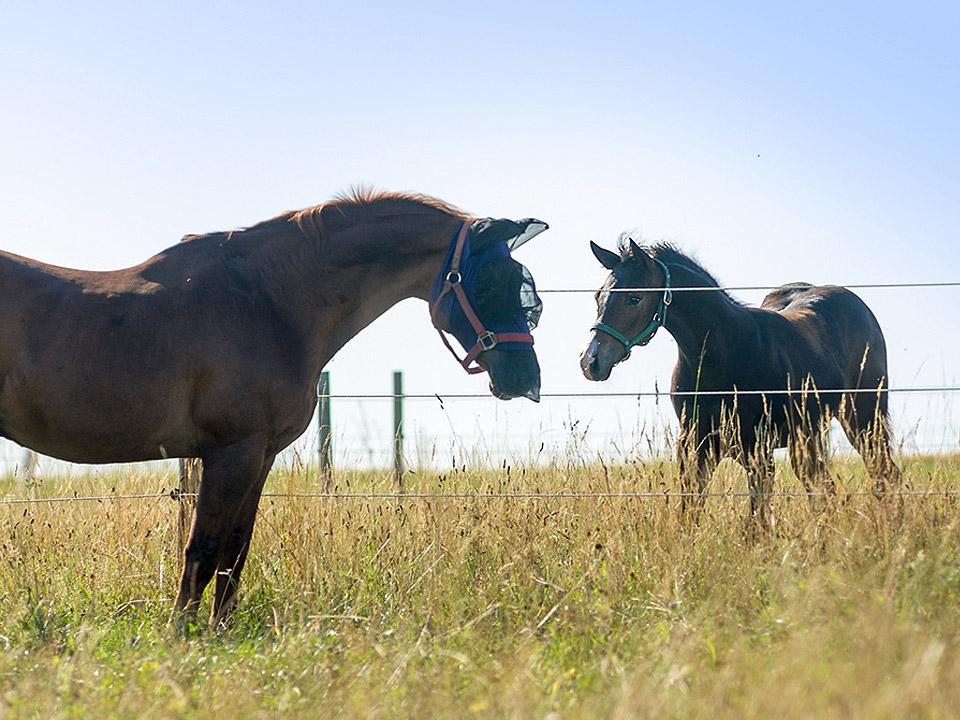 wormen bij paarden en veulens