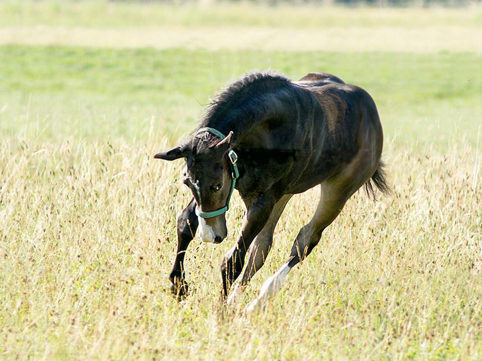DAPZWD_dierenartsenpraktijk-meppel_content-paarden-veulen