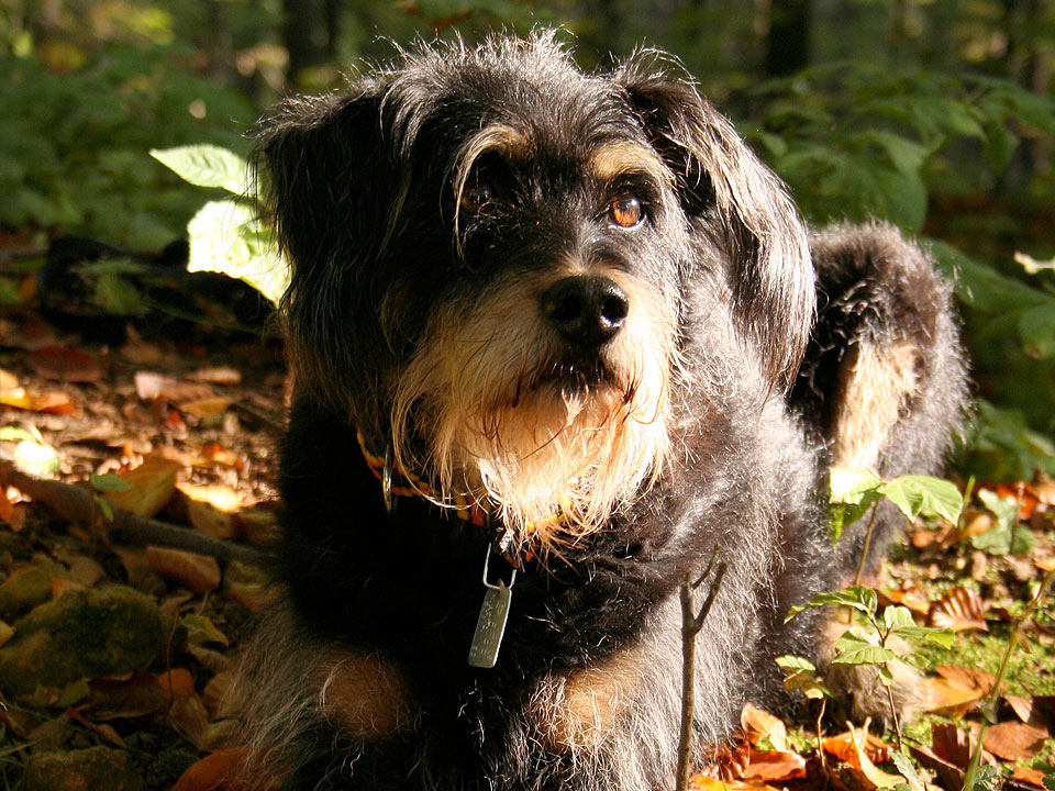 DAPZWD_dierenartsenpraktijk-zuidwest-drenthe_content_bos-hond-2
