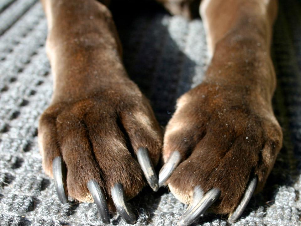 DAPZWD_dierenartsenpraktijk-zuidwest-drenthe_hond-allergie-poten