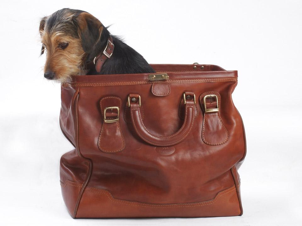 DAPZWD_dierenartsenpraktijk-zuidwest-drenthe_hond-reizen-2