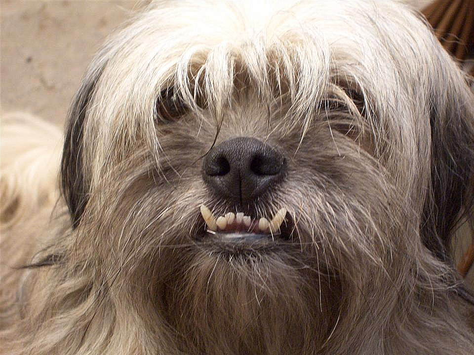 Maand van het gebit hond dierenarts Meppel
