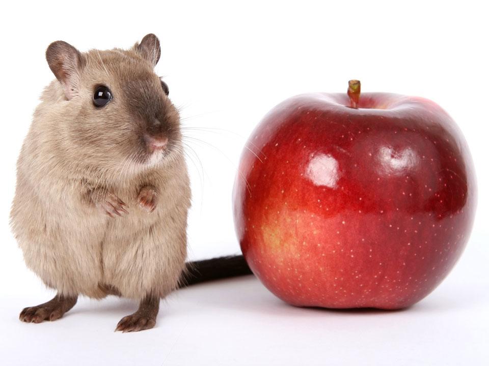 overgewicht huisdieren porties voeren