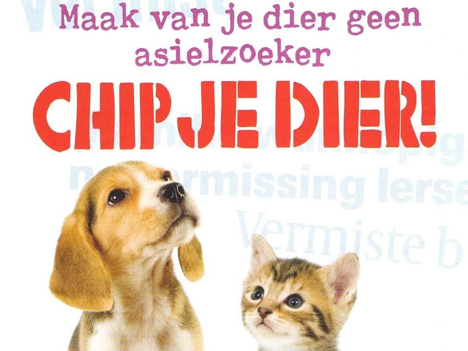 chip-jouw-huisdier-hond-kat-juni-chipmaand_DAPZWD-Dierenartsenpraktijk-Zuidwest-Drenthe-Meppel