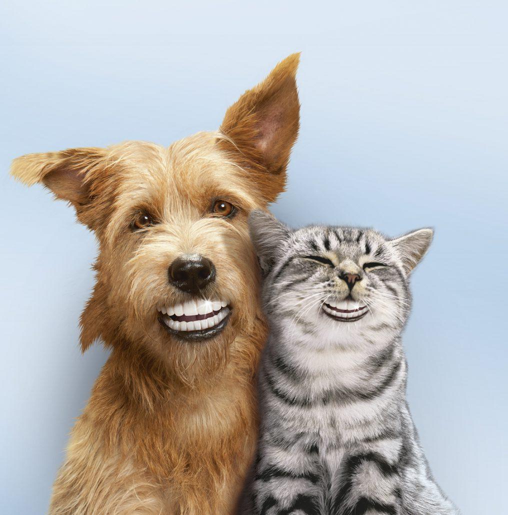 maand van het gebit dierenarts meppel gratis consult