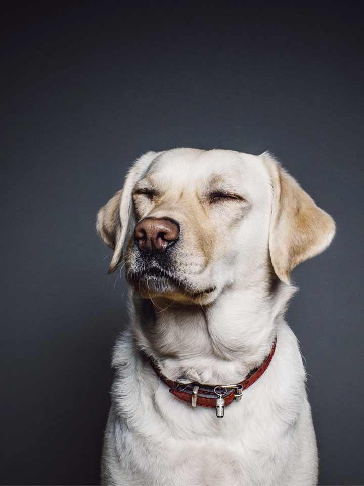honden-extra-05_DAPZWD-Dierenartsenpraktijk-Zuidwest-Drenthe-Meppel