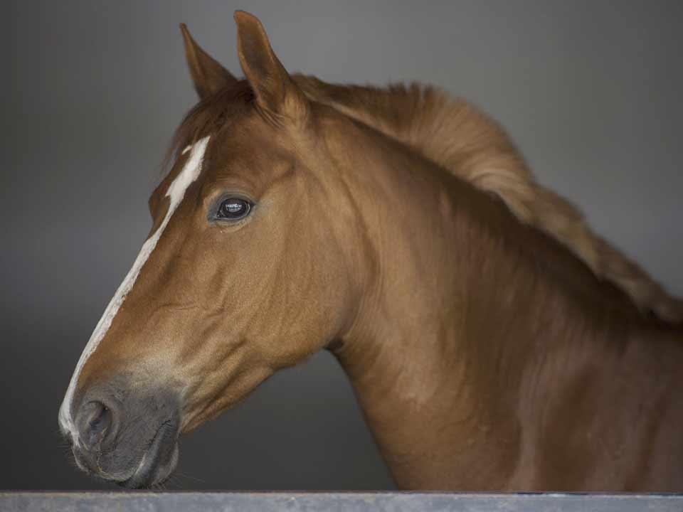 paarden-04_DAPZWD-Dierenartsenpraktijk-Zuidwest-Drenthe-Meppel