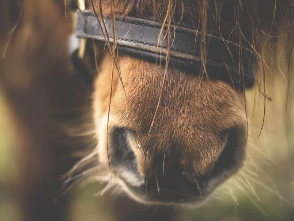paarden-06_DAPZWD-Dierenartsenpraktijk-Zuidwest-Drenthe-Meppel