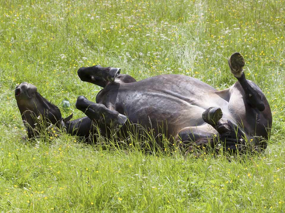 paarden-10_DAPZWD-Dierenartsenpraktijk-Zuidwest-Drenthe-Meppel
