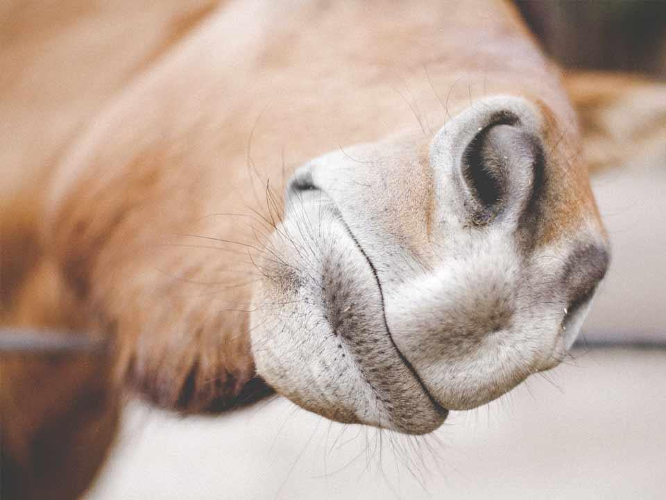 paarden-14_DAPZWD-Dierenartsenpraktijk-Zuidwest-Drenthe-Meppel