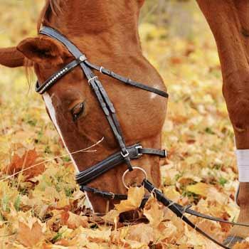 paard-pony_SQ-15_Dierenartsenpraktijk-Zuidwest-Drenthe_DAPZWD