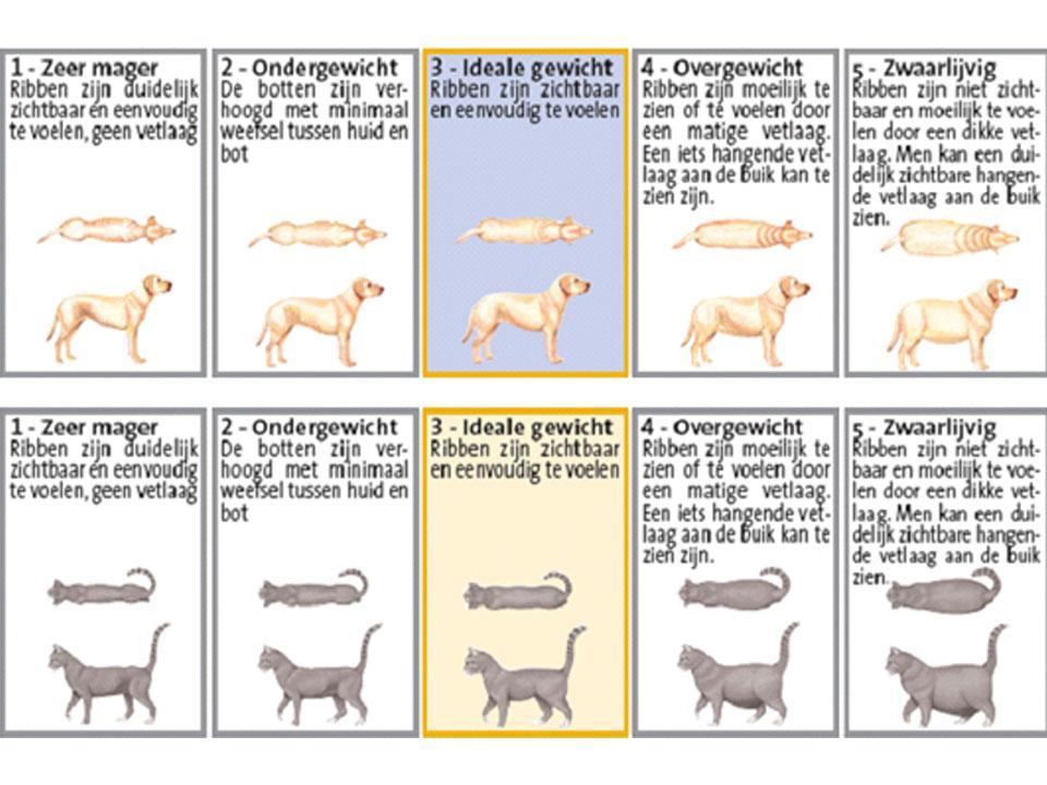 gewicht schatten hond dierenarts meppel dapzwd