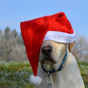 hond kerst dierenarts